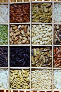 Rice seed varieties. Copyright: IRRI CC BY-NC-SA 2.0