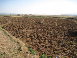 A farm in China during drought. Reduced food production can cause steep rises in food prices leading to socio-economic problems.  Photo credit: Bert van Dijk used under Creative Commons License 2.0