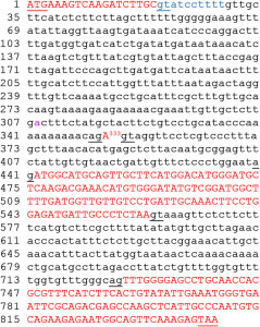 Single nucleotide exon