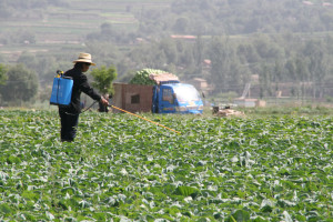 A farmer sprays pesticides on her crop