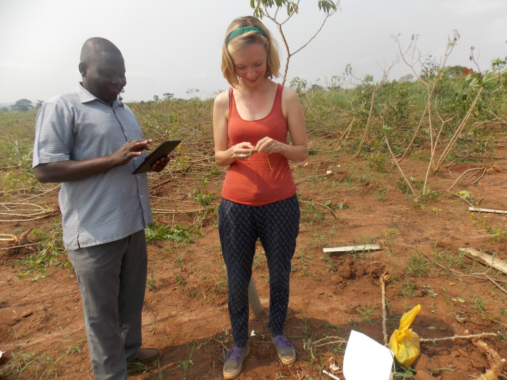 Tagging cassava plants