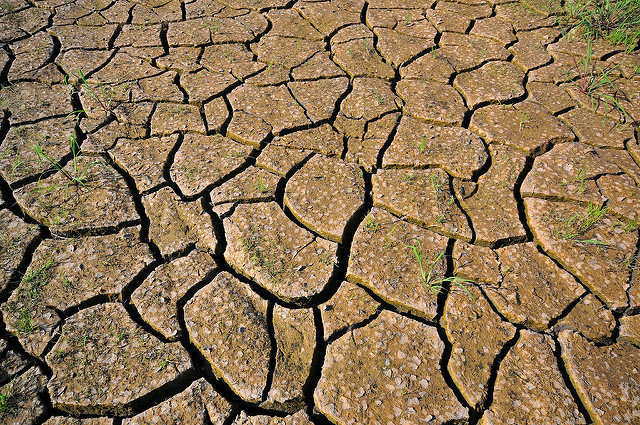 Drought is devastating for crops