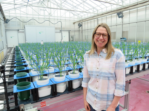 Ruth Bastow at the Australian Plant Phenomics Facility