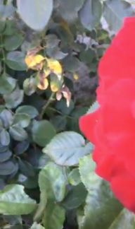 Monica Lewandowski's Botany Live Broadcast