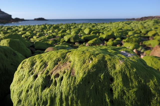 Plants' drought alert system has unlikely evolutionary origin: underwater algae