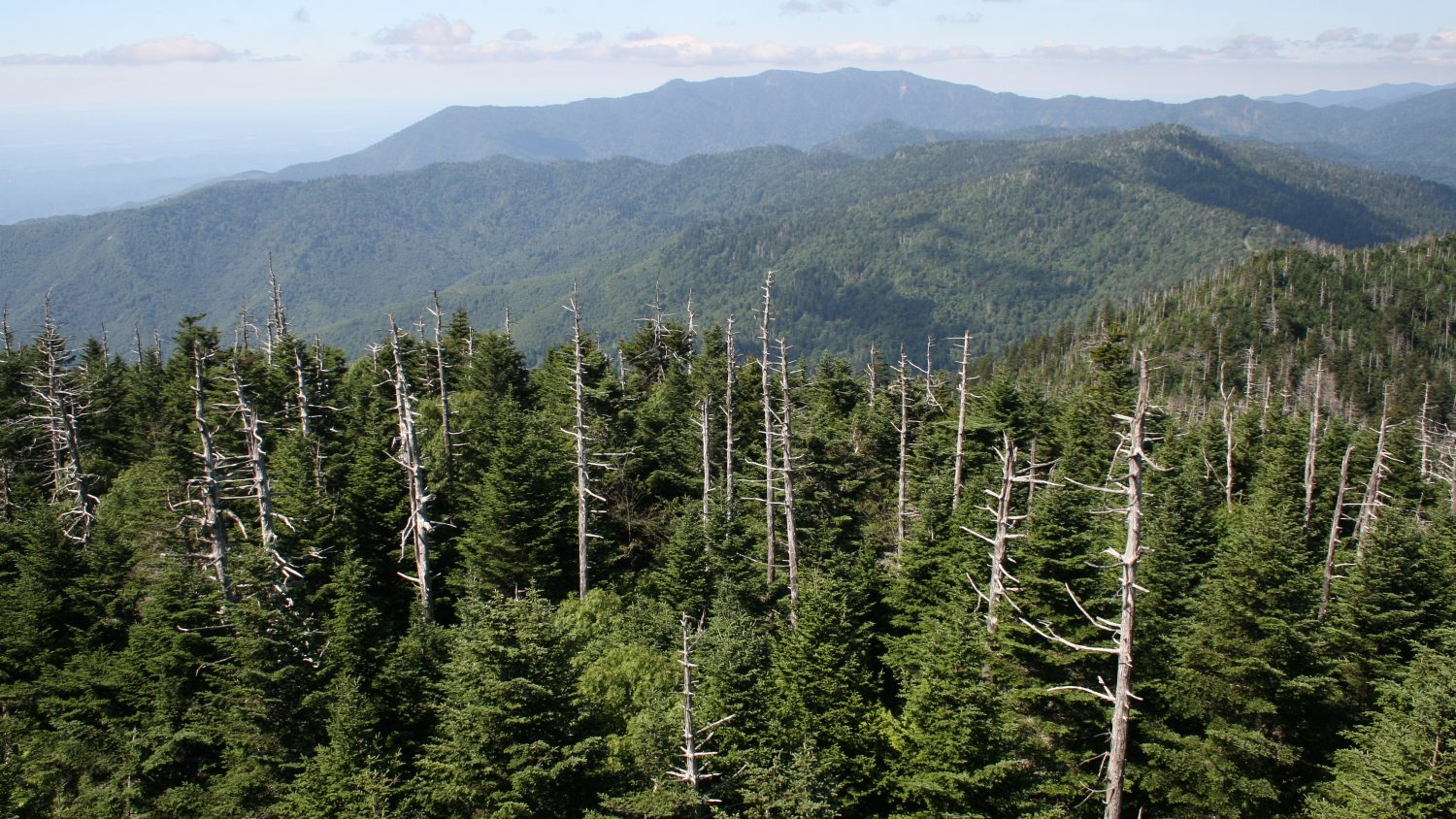 How Tree Diversity Regulates Invading Forest Pests