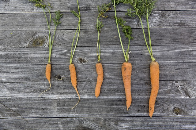 Not All Carrot Germplasm is the Same—In Terms of Salinity Tolerance