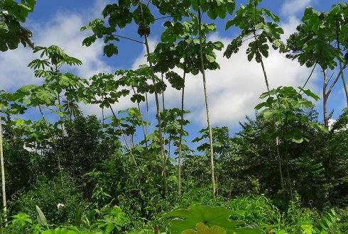 Wet and dry tropical forests show opposite pathways in forest recovery