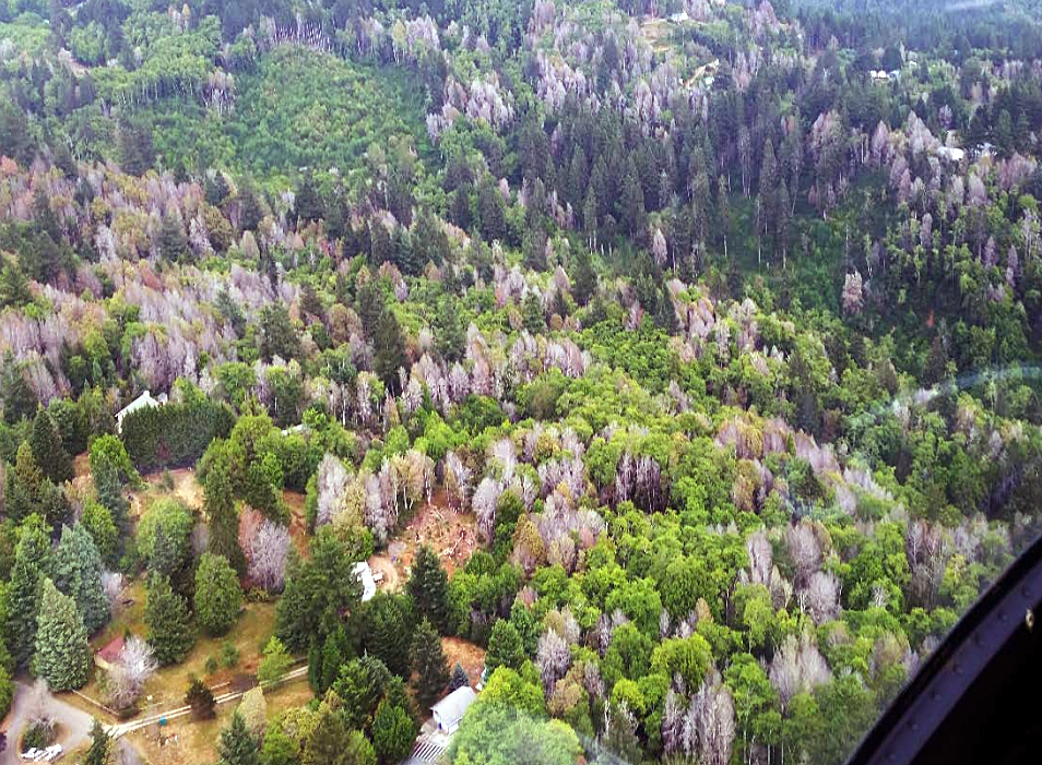 Can a Hands-on Model Help Forest Stakeholders Fight Tree Disease?