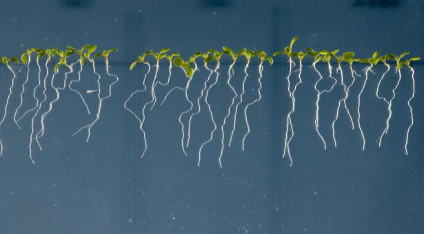 Plants and the art of microbial maintenance