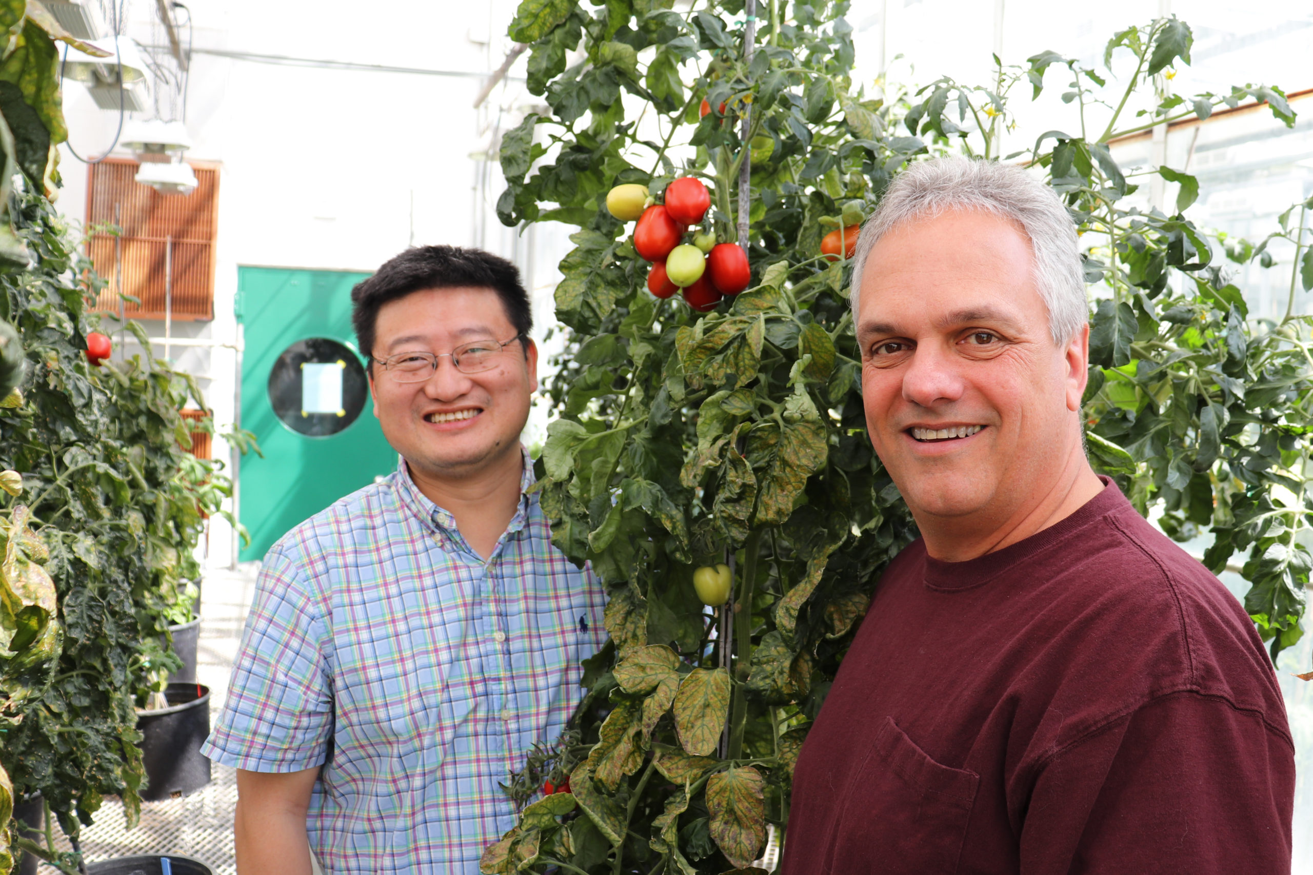 Scientists Create New Genomic Resource for Improving Tomatoes