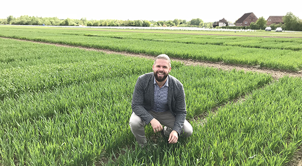 Wheat myth comes a cropper