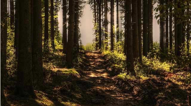 Assessing the greenhouse gas impact of forest management activities in EU countries