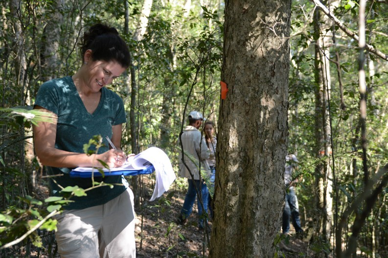 South African forests show pathways to a sustainable future