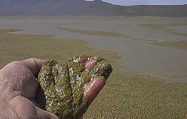 algae-blooms