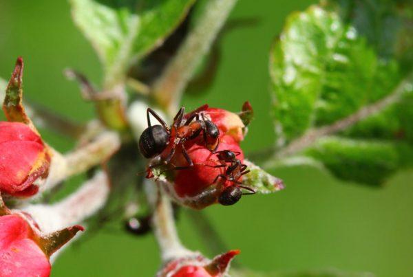 ants anf plants