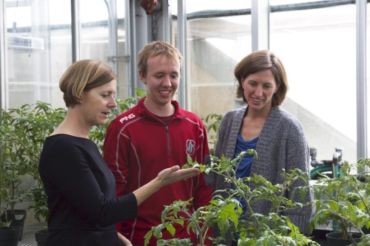 Researchers help tomato plants repel pathogens with a 'vaccine' to boost their chemical defense systems