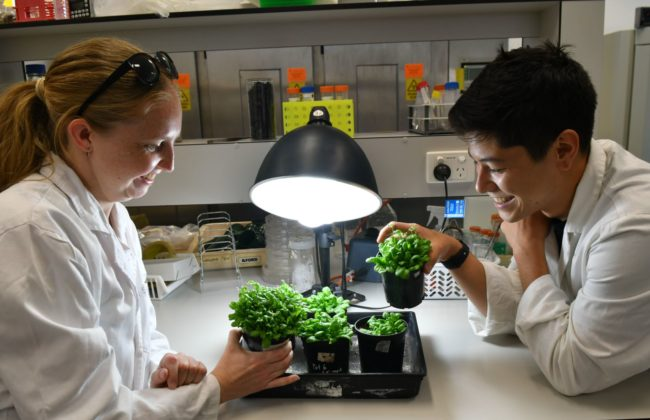 Raising plants to withstand climate change