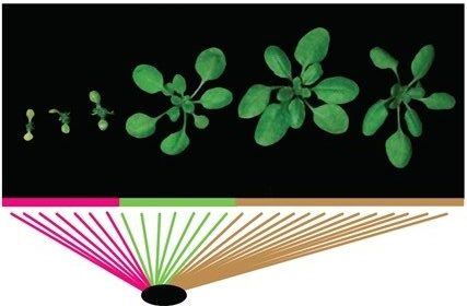 Genetic patterns associated with plant immunity