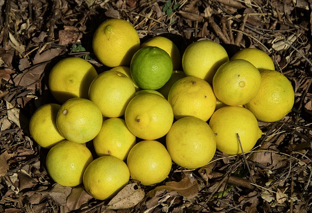 Scientists advance citrus greening research efforts