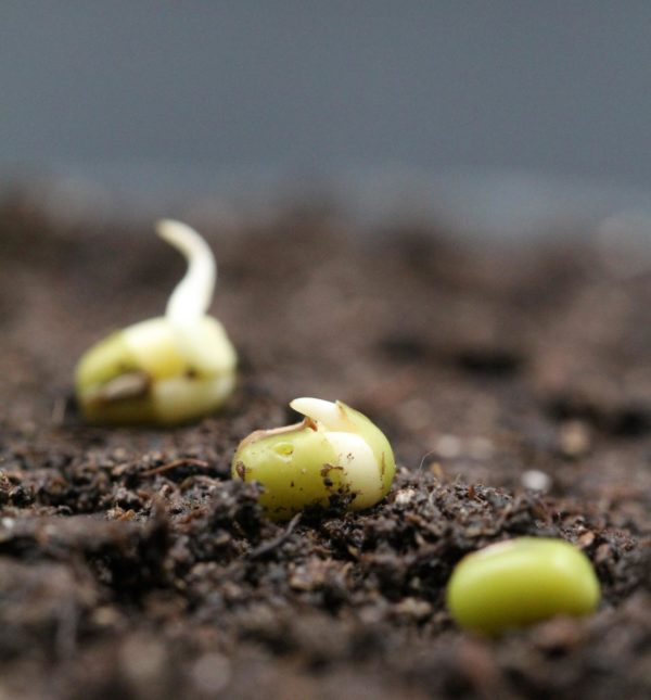 New insights into the earliest events of seed germination