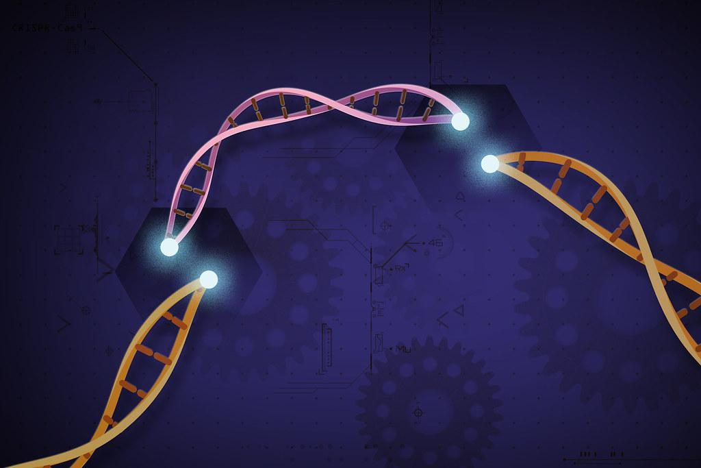 New viable CRISPR-Cas12b system for plant genome engineering