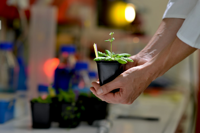 Mutation reduces energy waste in plants