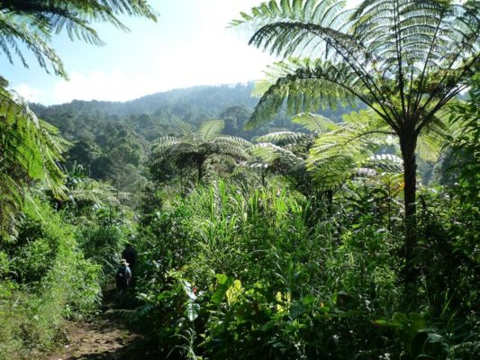 Medicinal plants thrive in biodiversity hotspots