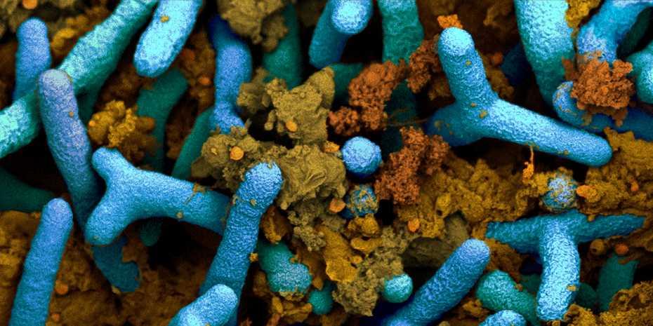 How bacteria fertilise soya