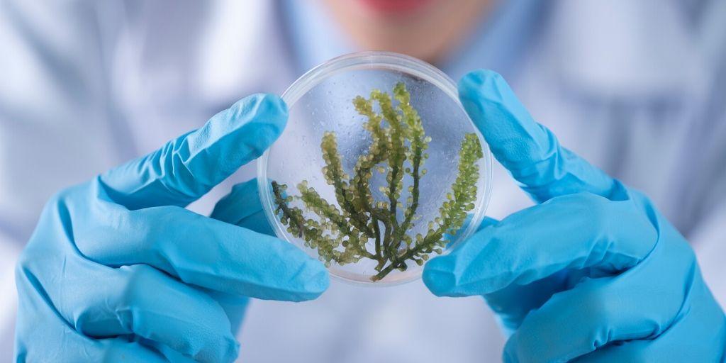 PlantSciVid Results Announcement