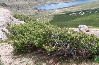 Scientists Reconstruct Spring Hydroclimate on South-central Tibetan Plateau by Living and Dead Alpine Juniper Shrubs