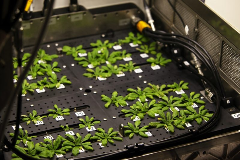 Controlling plants with the power of colored light
