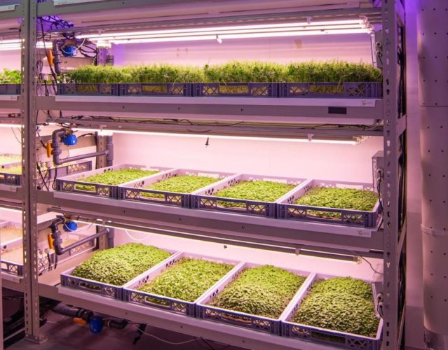 Space to grow, or grow in space – how vertical farms could be ready to take-off