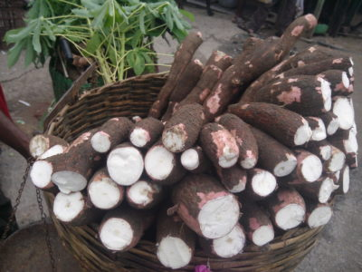New insights on flowering could boost cassava crops