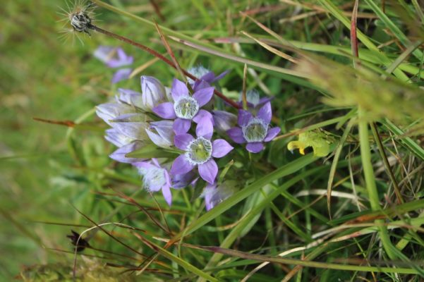 Study clarifies kinship of important plant group