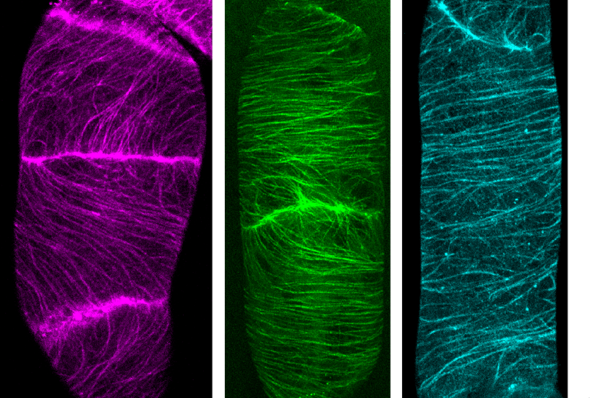 A new method for in vivo plant cell imaging with SNAP-tag proteins