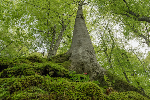 Europe's primary forests: What to protect? What to restore?