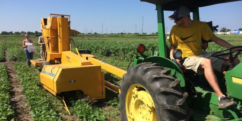 Cover crop could solve weed problems for edamame growers