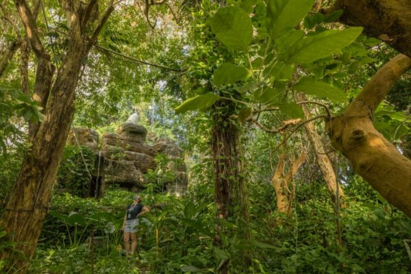 Rainforest at Biosphere 2 Offers Glimpse into Future of the Amazon