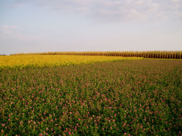 Crop diversification can improve environmental outcomes without sacrificing yields