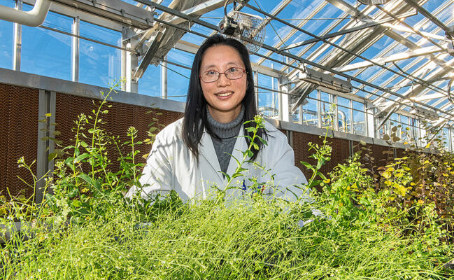 Scientists Discover Plants' Roadblock to Specialty Oil Production