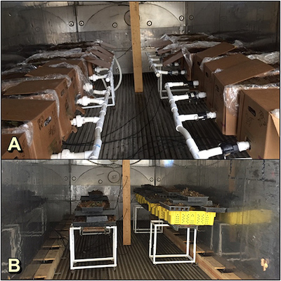 A, The precision thermotherapy unit setup for the high-elevation nursery trial in 2016. The extended setup allowed treatment of 18 boxes and employed four vacuums. B, The setup used for the trials run at Escalon and Ballico in 2017. A similar setup was used for the grower-run trial in 2018.​