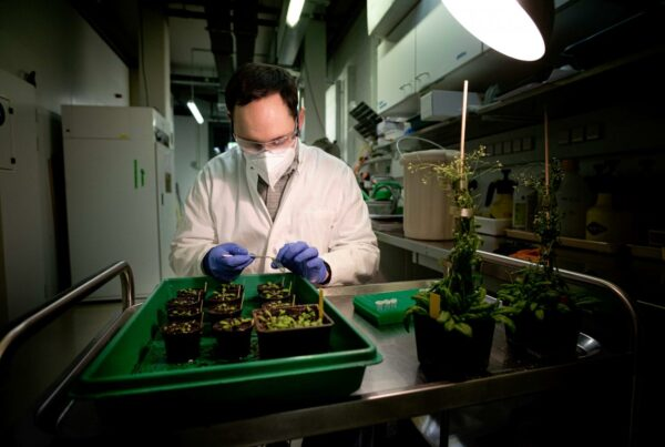 researcher collecting leaf material from bacteria infected plants.