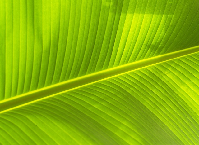Photosynthesis: our best bet to create a food secure world