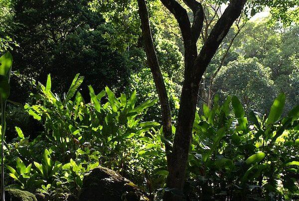 tree tropical jungle