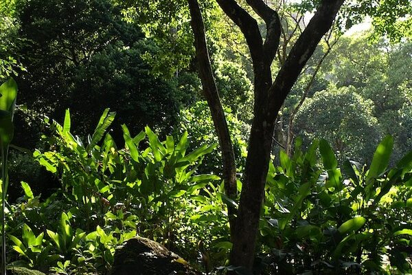 Researchers reveal potential mechanism of phosphorus acquisition of subtropical forests