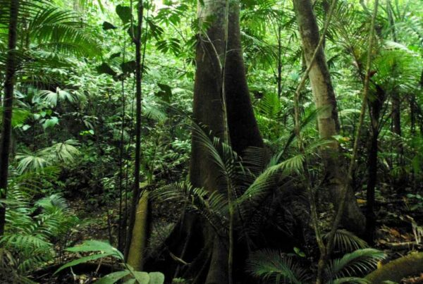 Secondary tropical forest in Panama