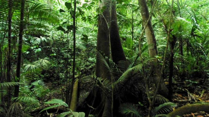 Legume trees support tropical forest growth by releasing nutrients from ancient soils
