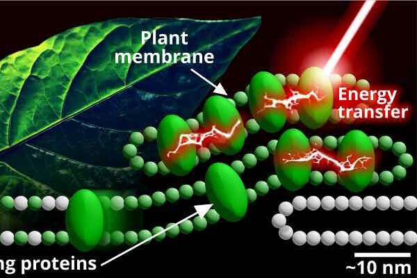Start small to answer big questions about photosynthesis