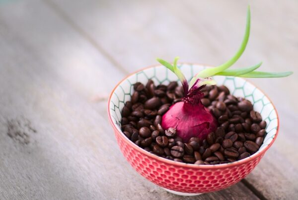onion in a bowl of coffee beans